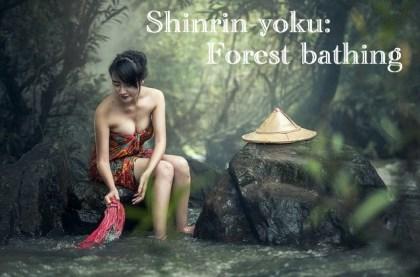 shinrin-yoku-1-1